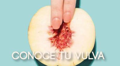 Conoce cómo está formada tu vulva